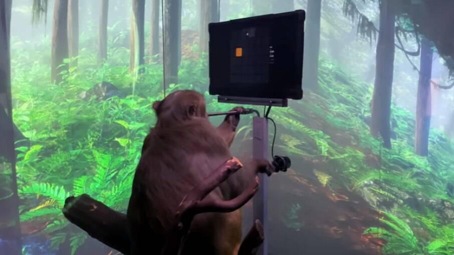 Macaco joga apenas com a mente, diz Neuralink