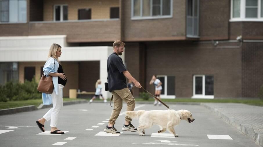 O enforcador não deve ser usado para que o animal pare de puxar durante os passeios, isso requer treinamento adequado