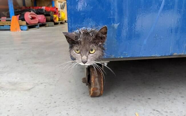 Gato em perigo preso dentro de lixeira
