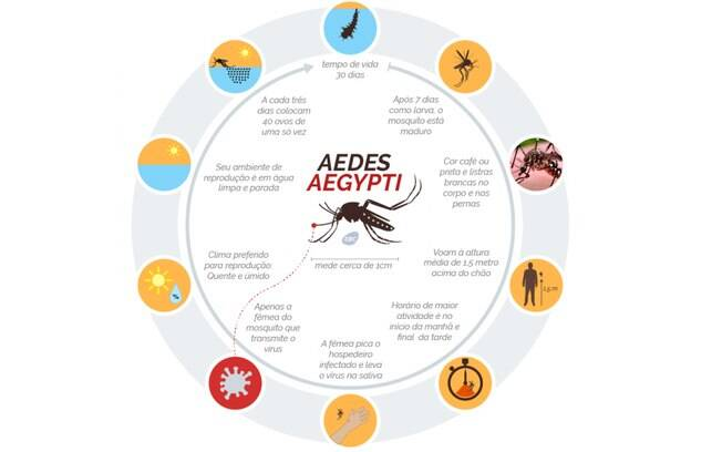 Ciclo do Aedes aegypti
