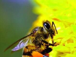 Para abelhas, velocidade é proporcional à distância