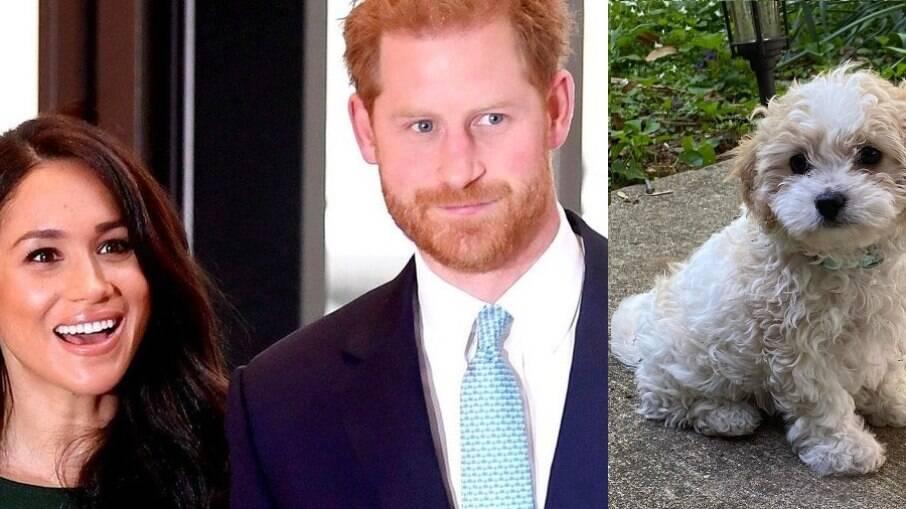 Por coincidência, nome da filha do casal Harry e Meghan é o mesmo da cachorrinha de