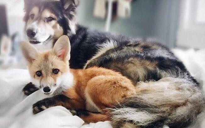 Juniper e Moose são amigos inseparáveis.