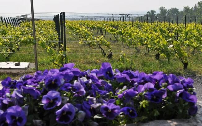Regiões de vinícolas oferecem a oportunidade do visitante conhecer a produção, passear pelos vinhedos, degustar vinhos e até participar da colheita