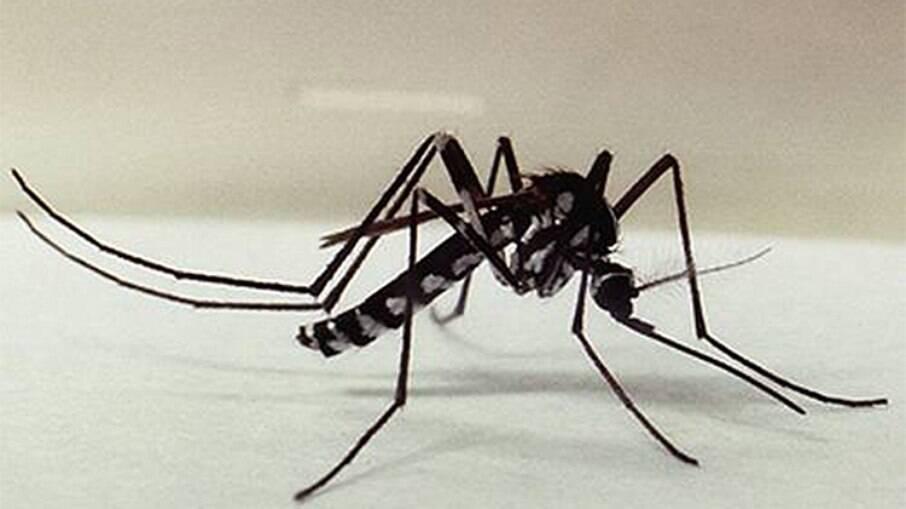 Mosquito do gênero Haemagogus é um dos principais transmissores de febre amarela silvestre no Brasil
