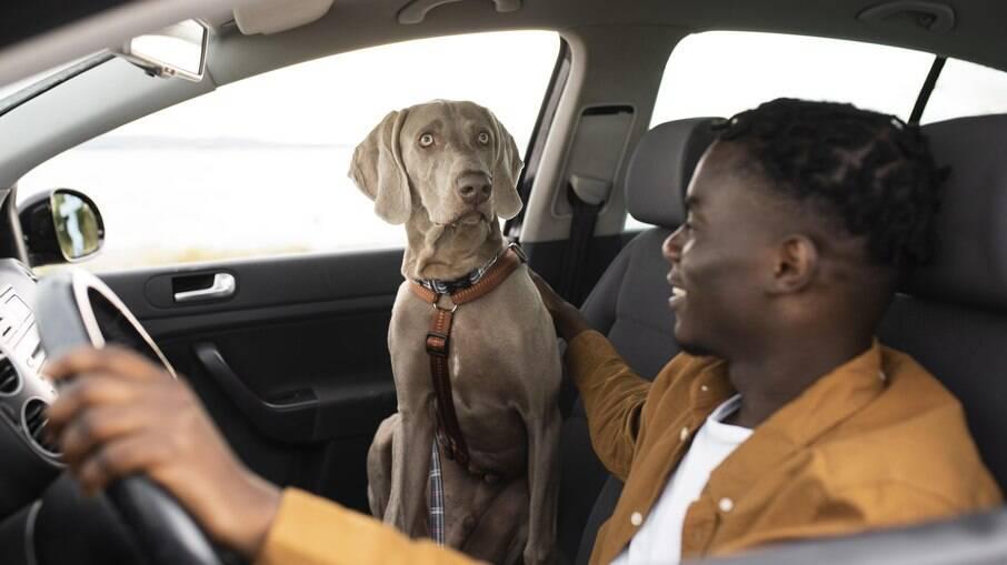 Levar o pet no banco do passageiro gera multa e pontos na habilitação