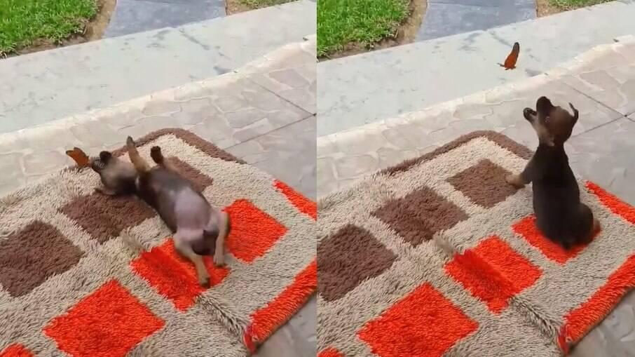 Cachorro é flagrado se brincando com borboleta