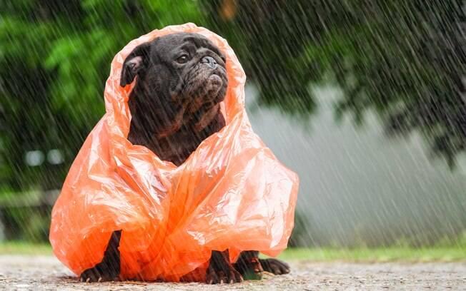 Proteger o cachorro nos passeios na chuva é importante