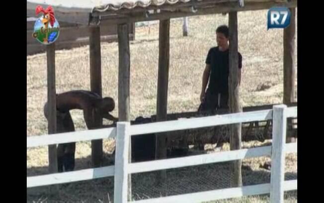 Dinei e Thiago sofrem com a vaca Judite