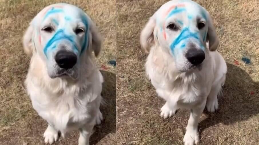 O golden retriever chamado Larry ficou com a cara toda azul após mexer no giz de cera das crianças