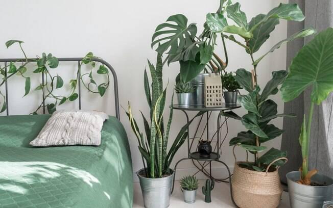 Cuidados com as plantas no calor: 7 dicas simples para o verão
