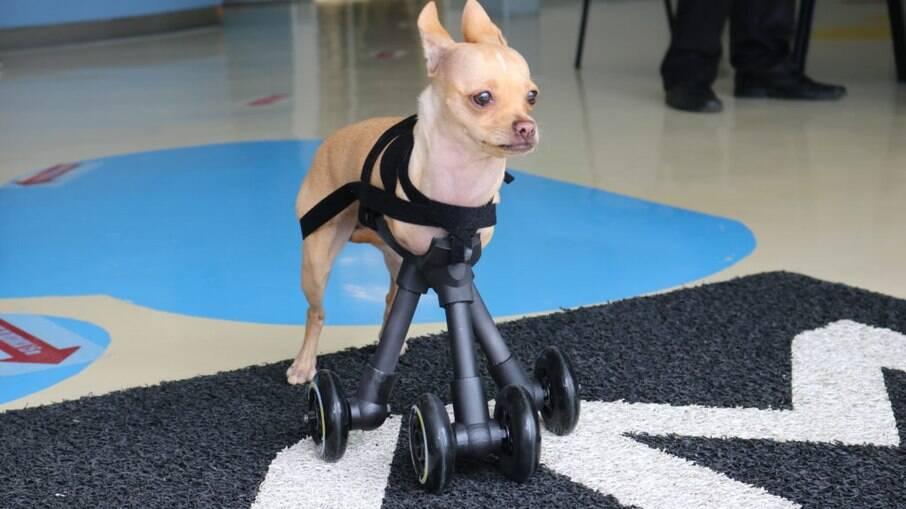 Cadela pode se mover livremente com o uso de prótese feita em impressão3D