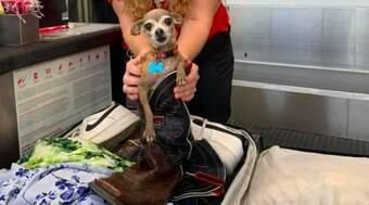 Donos encontram cachorro na mala após serem notificados