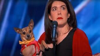 Cachorro é aplaudido de pé por jurados em programa americano