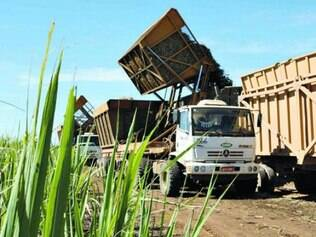 Produção de açúcar deve atingir 31,9 milhões/toneladas nesta safra