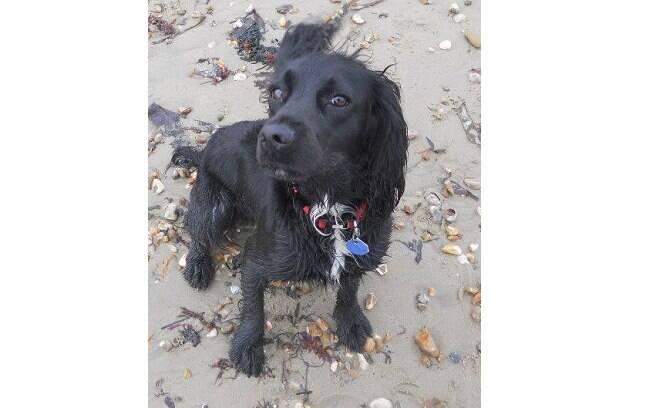 A cadela Fern foi encontrada 6 anos depois vagando pelas ruas da Inglaterra