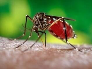 Aedes Aegypti, mosquito transmissor da dengue: Fortaleza, Natal e Salvador têm, historicamente, picos de dengue justamente no período da Copa