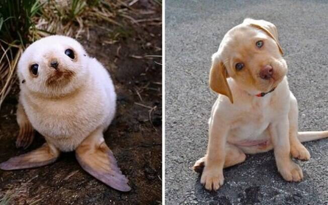 Uma foca e um cachorro que parecem estar bem confusos.