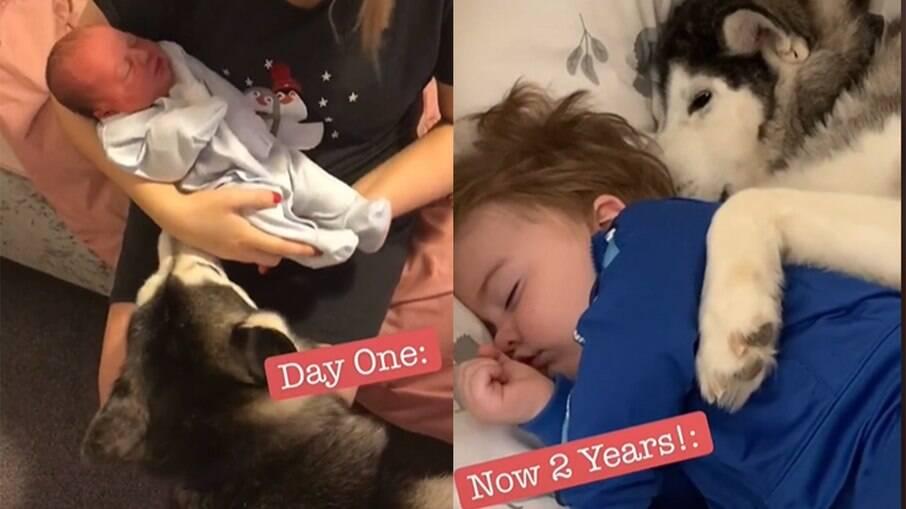 Vídeo mostra a evolução de amizade entre cachorro e bebê