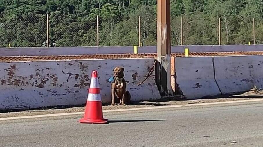 Cachorro foi amarrado a poste de viaduto em Belo Horizonte