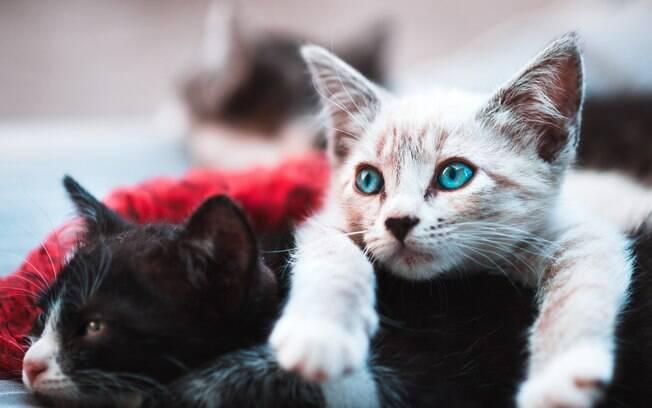 Esqueça a ideia de que gatos são ariscos e fechados e se surpreenda