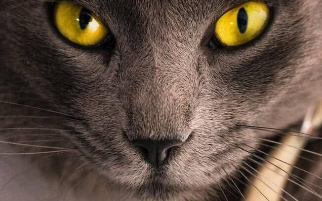 3 curiosidades místicas sobre os gatos