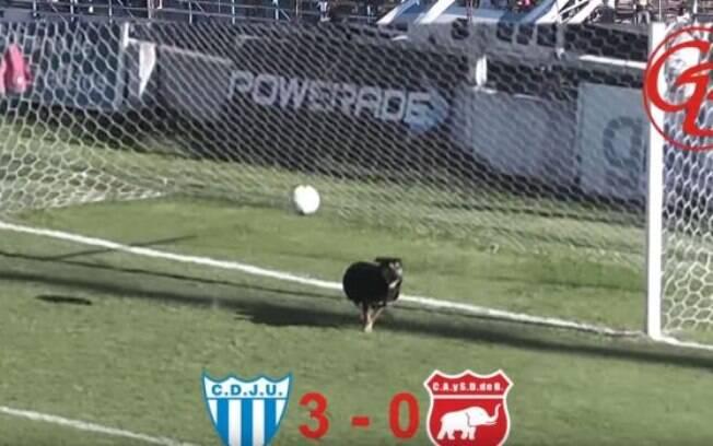Cachorro surge do nada durante partida de futebol argentino e impede gol