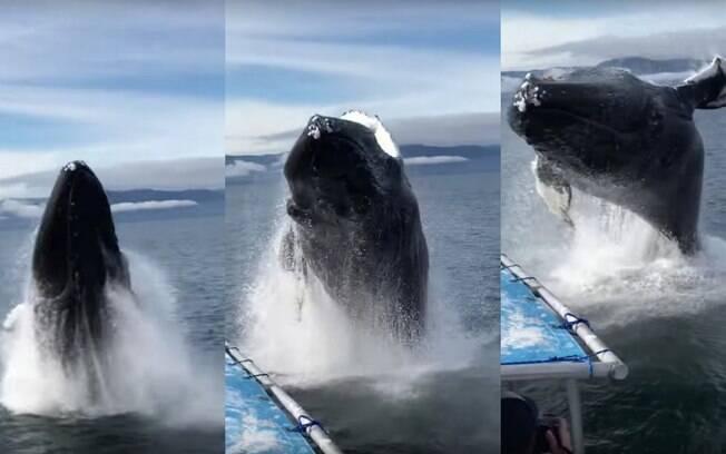 Sem que turistas estivessem preparados, baleia-jubarte dá um salto ao lado de um barco que fazia uma expedição