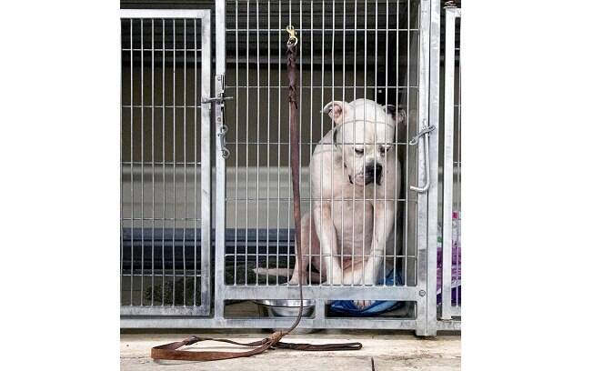 A foto do Bulldog Ritter teve mais de 3 mil compartilhamentos