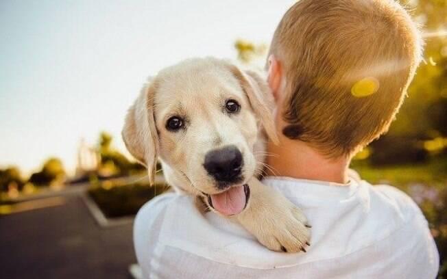 Não se desespere e aprenda a lidar com uma convulsão canina