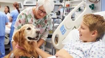 Hospital aposta em cães de terapia para apoio emocional de equipe