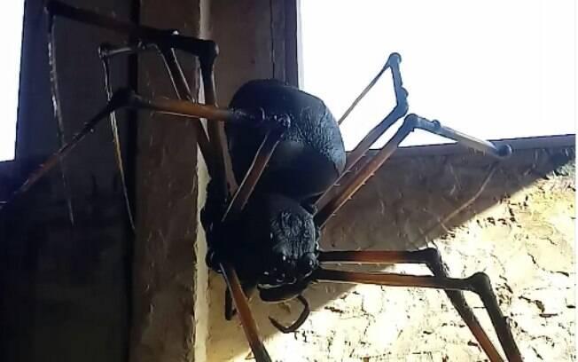 Aranha gigante na mostra Medos & Nojos.