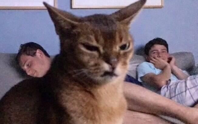 Esse gato percebeu das pior maneira possível que você soltou um pum daqueles