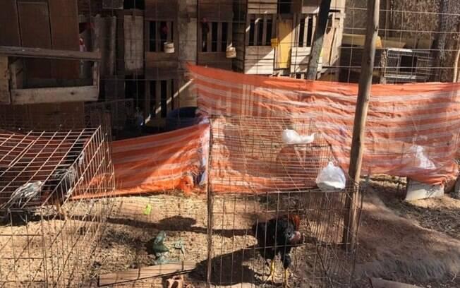 Polícia encerra rinha de galos em Americana e aplica multa de R$ 324 mil