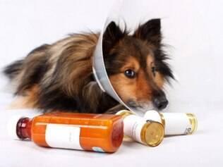 Dar remédios para os pets por conta própria é arriscado e pode piorar o estado do bichinho