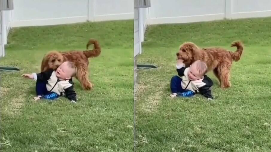 Bebê e cachorro se divertem em momento fofo