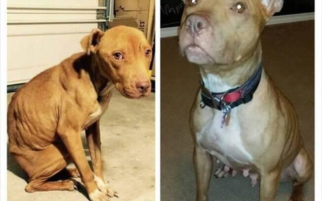 Abatido e acuado quando abandonado, cachorro ficou até com olhar mais imponente.