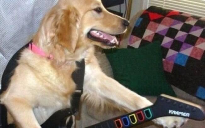 Um cachorro que ama Guitarhero.