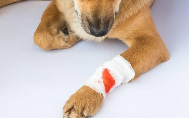 Se seu bichinho se cortou e o sangue demorou muito para estancar, o recomendado é levá-lo ao veterinário o mais rápido possível