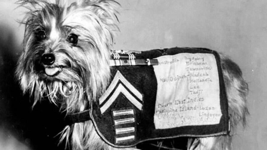 Smoky recebeu homenagens durante sua vida canina