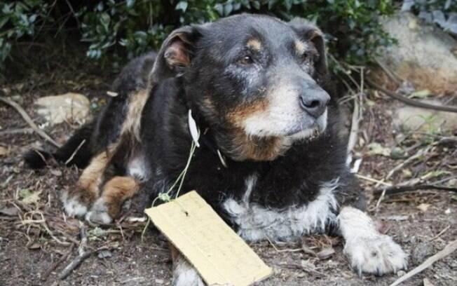Louie desapareceu e voltou para casa com um bilhete na coleira
