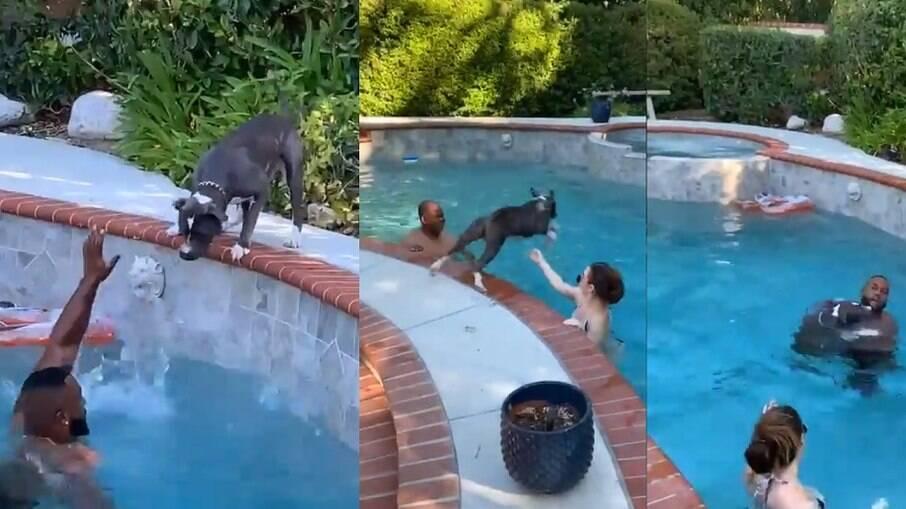 Cachorro que não sabe nadar pular em piscina para salvar tutor, que ele pensa estar se afogando