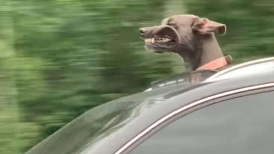 Uma família estava passeando de carro quando notou algo bem curioso no veículo ao lado