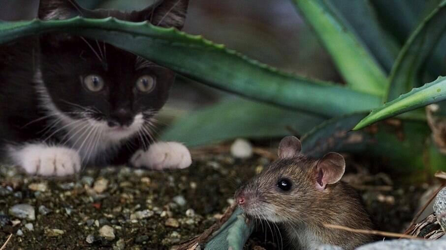 Gatos são caçadores por natureza
