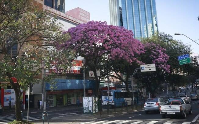 Terça-feira será de céu azul e clima ameno em Campinas