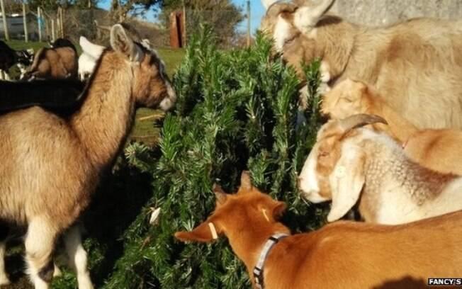 Animais arrancam folhagem das árvores