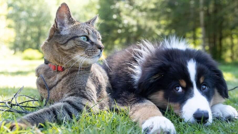Mudanças na vida dos animais de estimação após a pandemia