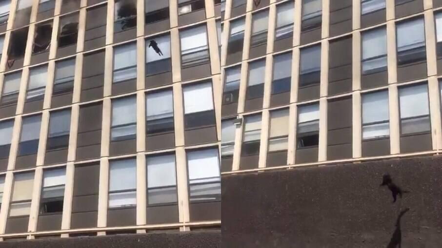 O gato pousa em segurança após o salto de cinco andares