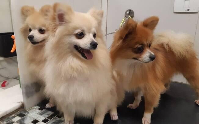 Os cães de raça foram resgatados e estão recebendo os cuidados necessários