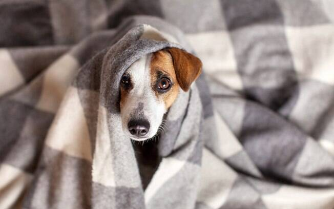 Os animais idosos podem sofrer com o frio